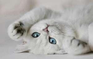 猫咪喵喵叫是什么意思?